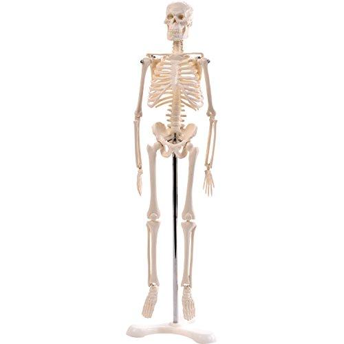 """Anatomie Modell """"Menschliches Skelett"""",klein, ca. 45 cm, geeignet als Lernmodell oder Lehrmittel..."""