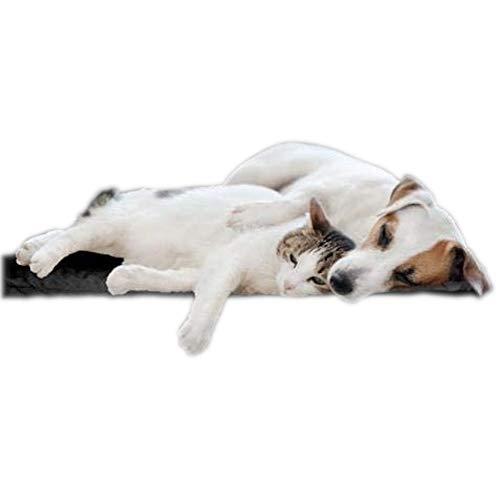 biomagnet24®, 80cm x 60cm Magnetfeldmatte, Magnetfelddecke, Magnetfeldtherapie für Tiere, zur...