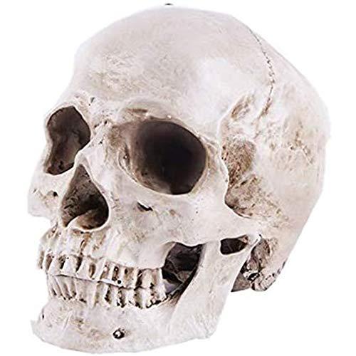 WANGIRL Totenkopf Modell Menschliches Schädelmodell Lebensgröße für Anatomie 1: 1 Menschlicher...