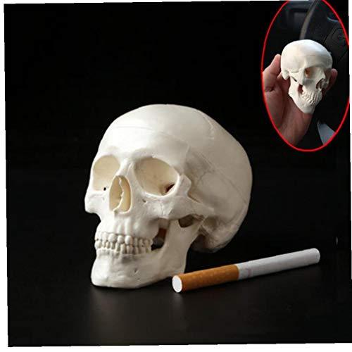 Hotaden 1pc Mini Schädel menschlicher anatomisches Anatomie Medical Modell Convenient 92 * 99 *...