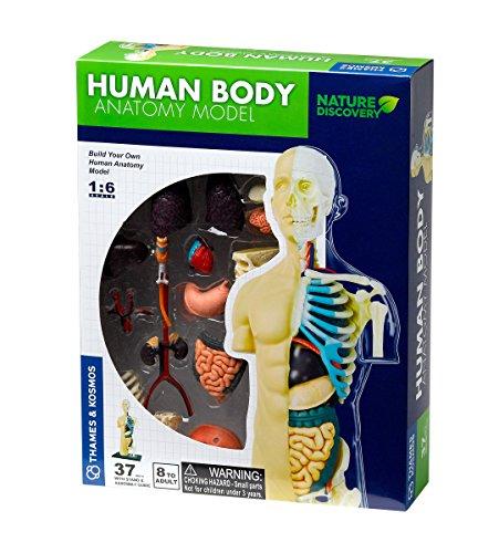 Thames & Kosmos 260830 Anatomie-Modell   37 Teile mit Ständer und Leitfaden   Bauen Sie Ihren...