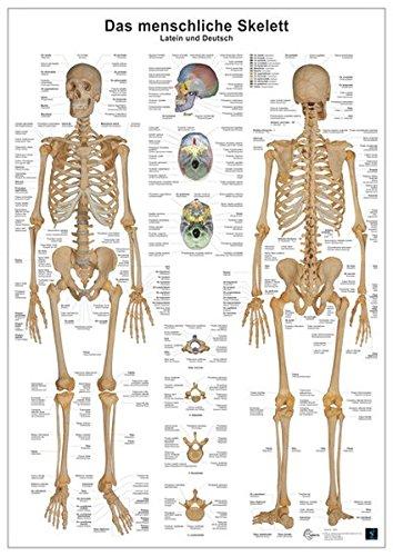 Das menschliche Skelett: Anatomie-Lerntafel