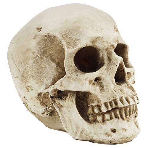 Kurtzy Totenkopf Deko Gothic Deko Menschlicher Schädel Modell L12 x W17 x H14,5 cm - Realistische...