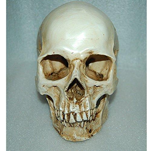 1: 1 Menschlichen Schädel Modell Figur für Anatomisch Medizinisches Lehr Sammlung Aquarium...