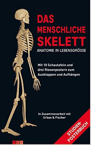 Das menschliche Skelett. Mit 10 Schautafeln und drei Riesenpostern zum Ausklappen und Aufhängen
