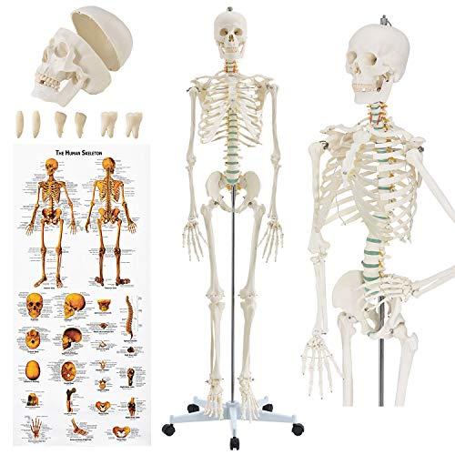 Juskys Anatomie Skelett - Modell inkl. Anatomie-Poster, Stativ mit Rollen & Schutz-Haube -...