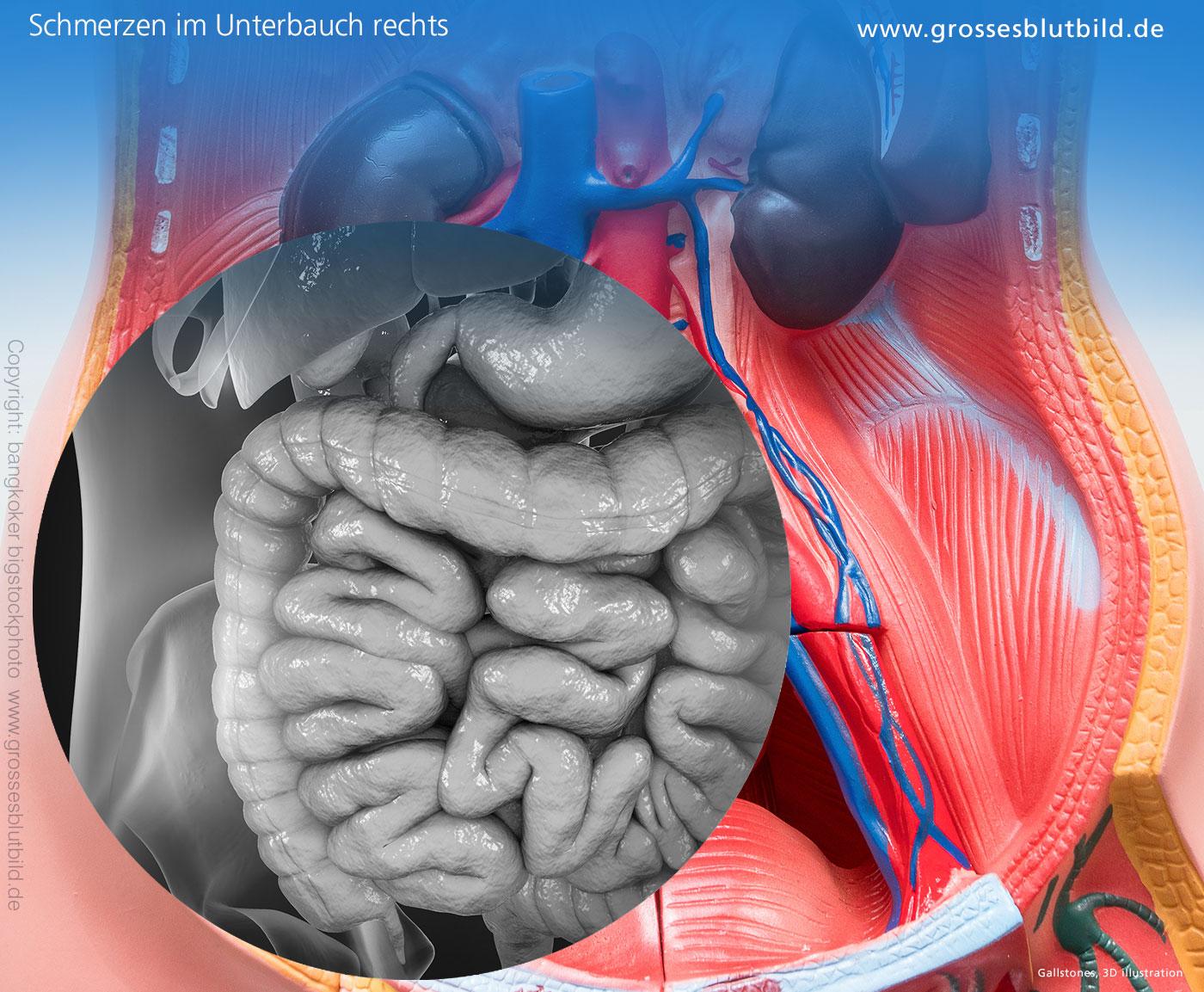 Organe im rechten Bauchraum