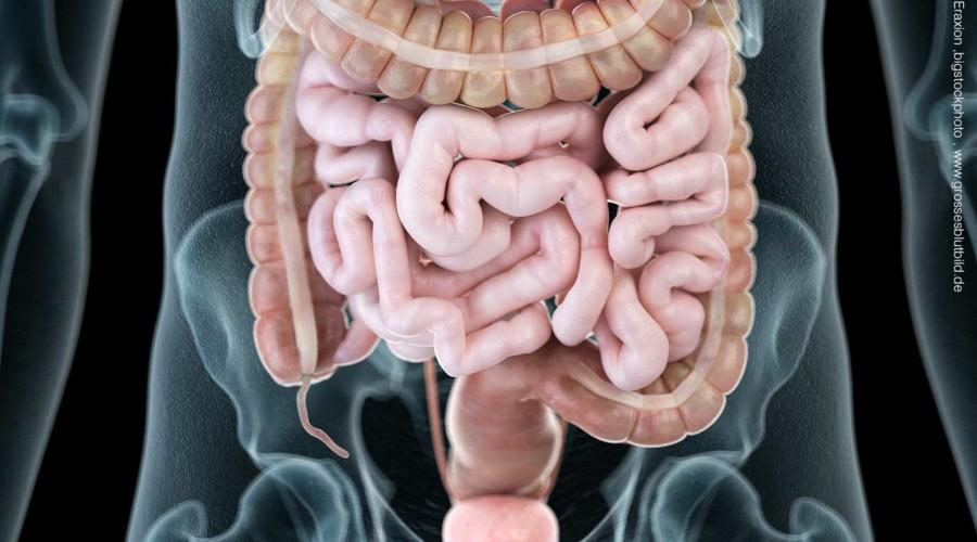 Bauchraum Organe